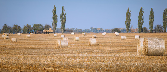 Hay bail harvesting in wonderful autumn farmers field landscape with hay stacks