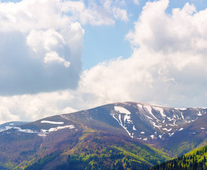 mountain hymba landscape  in springtime. part of borzhava ridge of ukrainian carpathians located in transcarpathia. summit with spots of snow. forest in green foliage. sunny weather with clouds
