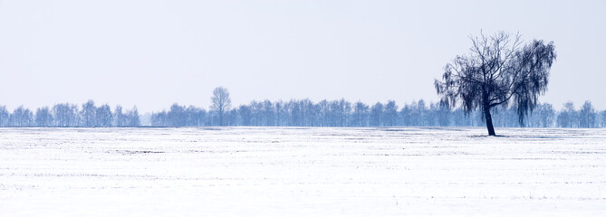 Panorama of a snow-covered field with a lonely tree.