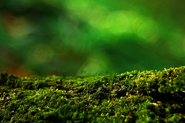 macro moss landscape / green abstract natural view, summer forest, moss macro