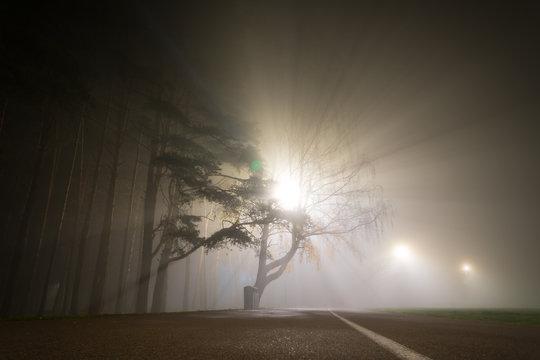 Fog in the autumn night park