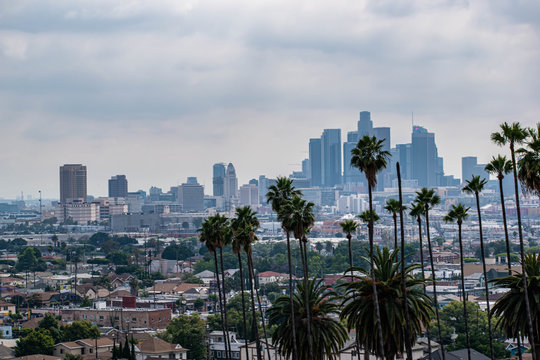 View of Los Angeles, CA with palm trees and moody sky