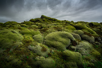 Green moss covered volcanic lava field. Iceland