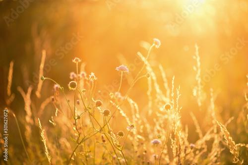 Wall mural Field of grass during sunset