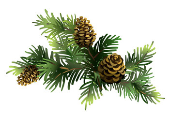 Fir branches with cones. Pine. Spruce. Vector illustration.