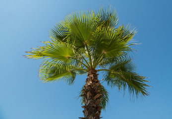 Wall Mural - Tropical background of palm trees against blue sky.