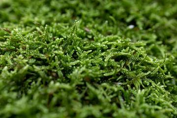 mech zbliżenie makro zielony