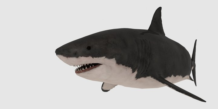 Great white Shark isolated on white background extremely detailed and realistic 3d illustration