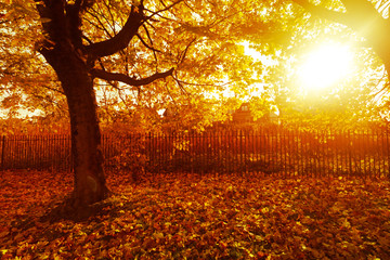 In de dag Rood traf. Autumn in the beautiful West End Park with the sun rays and trees with orange leaves in Airdrie, Scotland, be