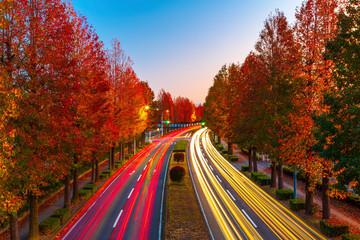 Fototapete - Landscape of autumn tress with a leading road in Tsukuba, Japan