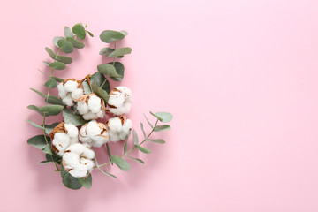 Beautiful cotton flowers and eucalyptus branches on color background