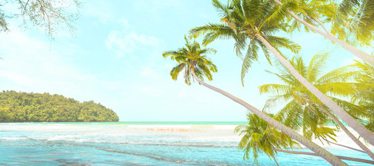 Panoramic picture of coconut trees by the beach in Thailand in summer