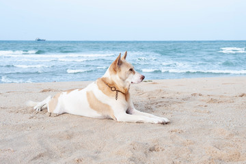 Lazy dog relax on the beach