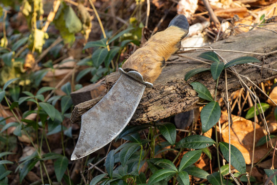 Hunting knife with hoof handle on in the autumn forest