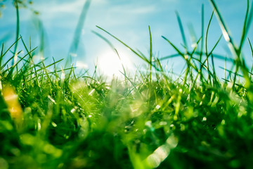 Fresh grass and sunny blue sky on a green field at sunrise, nature of countryside Fotoväggar