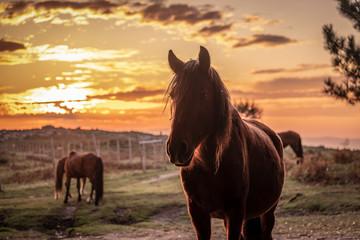 Silhueta de cavalo ao pôr do sol nas montanhas Fotoväggar