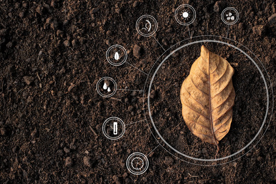 Dry leaves on the ground, loamy, and with icon technology about microbial degradation and various factors that become soil.