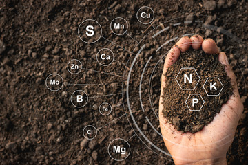 Fototapeta Loamy soil that is rich in man's hands and has iconic technology about soil nutrients that are essential to cultivation. obraz