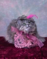 Portrait beautiful gay kitty