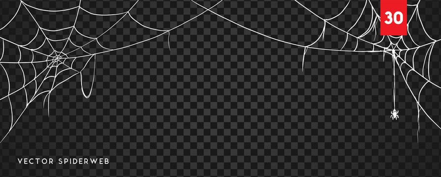 Halloween cobweb and spiders isolated on dark transparency background