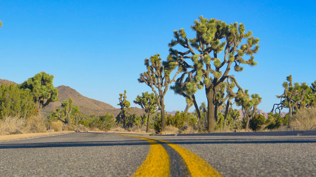 LOW ANGLE: Empty road runs through a national park full of yucca palm trees.