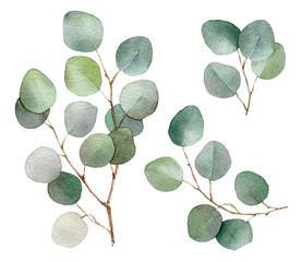 Eucalyptus branches set hand drawn in watercolor isolated on a white background. Floral elements for creating invitations, greeting cards, arrangements. Botanical illustration. Watercolor painting