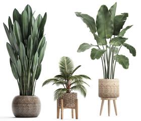 3d illustration of tropical plants banana