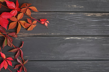 Autumn red leaves on black wooden background