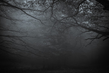 Dark forest of mount Cucco at night with fog in Umbria