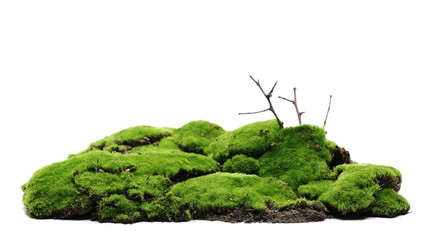 Green moss hill with dry branch isolated on white background and texture