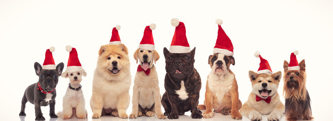 cute happy dogs wearing santa claus hats