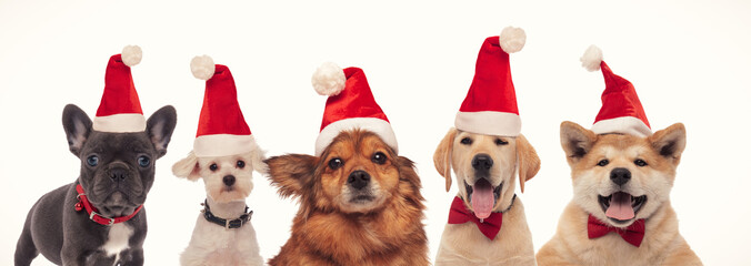 most adorable group of santa claus dogs