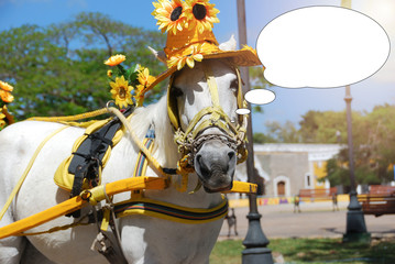 Funny picture with bubble idea white horse with sunflower hat in the square.