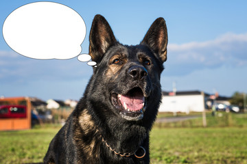Funny picture with bubble idea dog laughs. German shepherd.