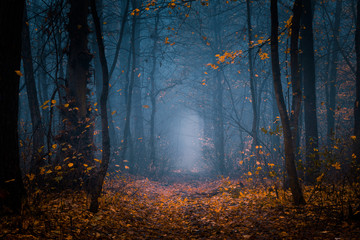 Fototapeten Straße im Wald Beautiful, foggy, autumn, mysterious forest with pathway forward. Footpath among high trees with yellow leaves.