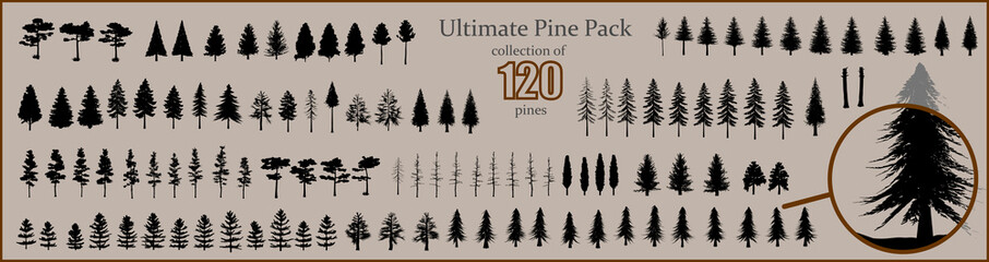 Ultimate Pine collection, 120 detailed, different tree vectors Wall mural