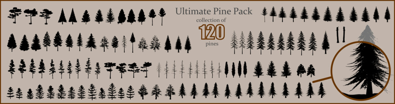 Ultimate Pine collection, 120 detailed, different tree vectors