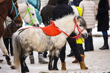 ponies are waiting for them to ride