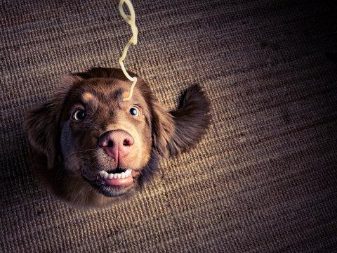 Hund ißt Nudel und bettelt dabei