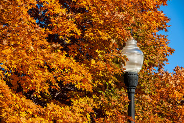 Close-up of vintage street light against brilliant fall foliage and blue sky - selective focus.