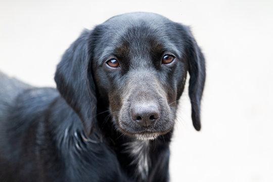 dog with sad eyes looking at the camera