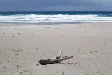 tronco expulsado por el mar a la playa