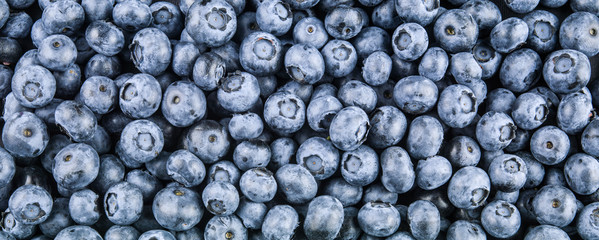 Blueberry natural fresh berries. Food background.