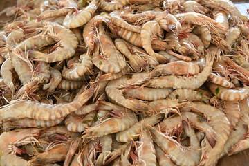 Garnelen Garnele Schrims Garnelenzucht Krebstiere Krebstier  Delikatesse Schrimssalat Meeresfrüchte Speisen Speise Essen Zehnfußkrebse Formtaxon Rostrum  Schalentier Exopodit Decapoda Penaeidae