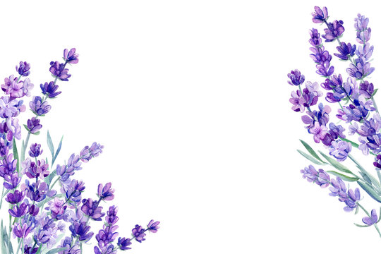 set of lavender flowers elements on an isolated white background, watercolor illustration, hand drawing, greeting card with a place for text