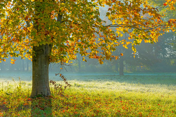 Aluminium Prints Autumn Trees in fall colors in a green grassy field in sunlight in autumn