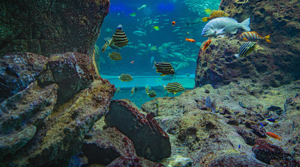 picture of the aquarium. Colorful fish