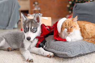 Cute cat with dog at home on Christmas eve