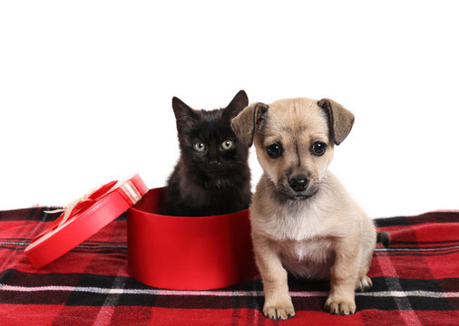 Cute puppy and kitten with Christmas gift box on white background