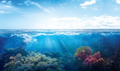 Garden Poster Coral reefs background of beautiful coral reef with marine tropical fish visited here
